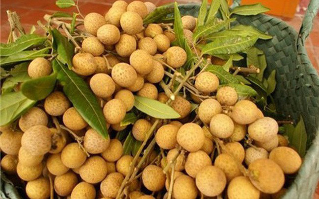 Fresh longan from Vietnam could be export to Australia from 2019