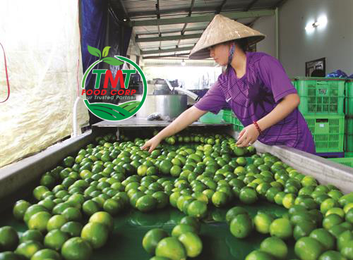 SEEDLESS LIME – CROPS BRING ECONOMIC EFFICIENCY IN CHAU THANH